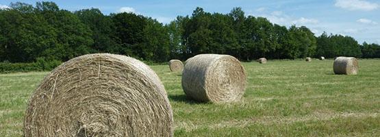 Culture fourrag re corr ze - Chambre d agriculture correze ...