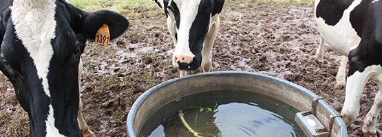 Abreuvement chambre d 39 agriculture corr ze - Chambre d agriculture correze ...