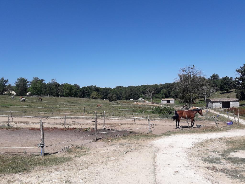 Equins chambre d 39 agriculture corr ze - Chambre d agriculture haute vienne ...